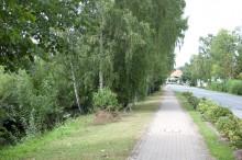 Saaledamm 2011 Richtung Stadt